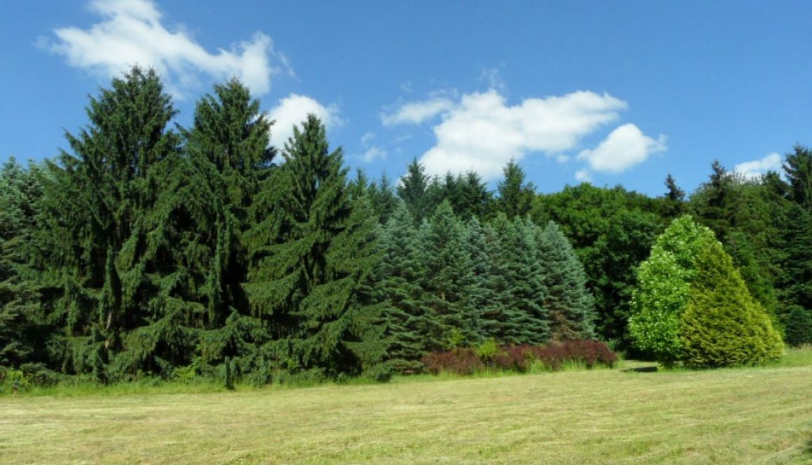 Kirándulás az Agostyáni Arborétumba