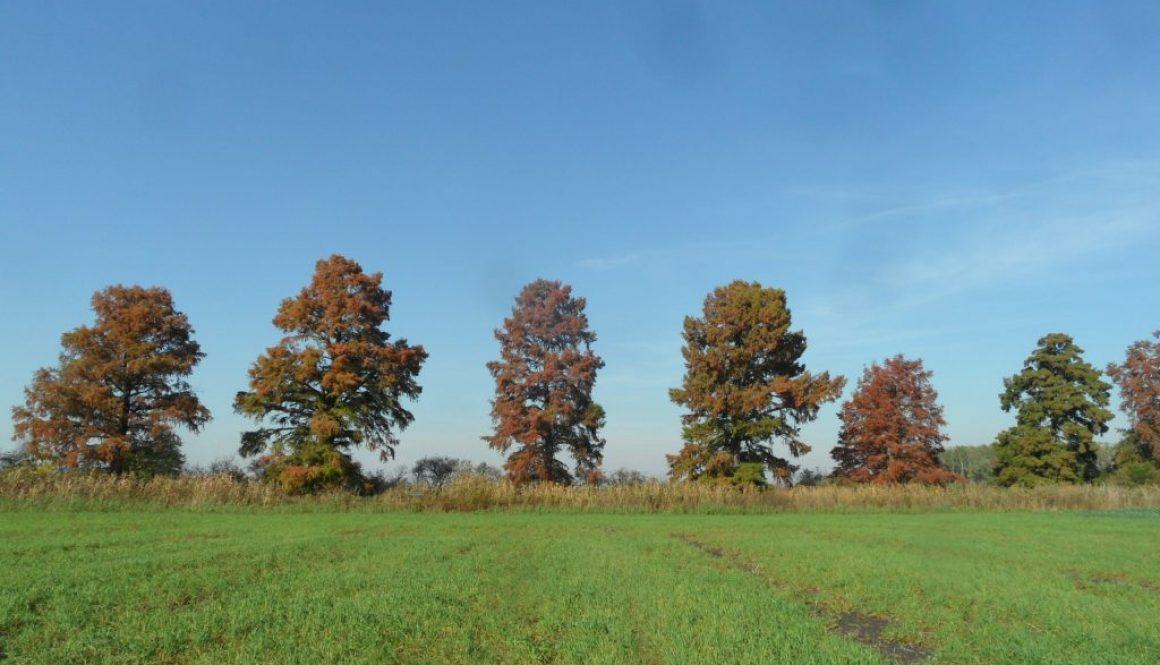 Győr- Moson – Sopron megyei fakeresés