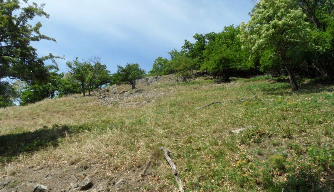 Fakeresés a Visegrádi-hegységben