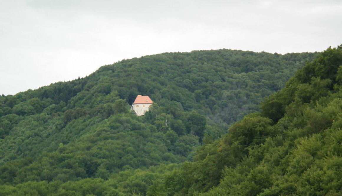 Nagy fák Szlovéniában